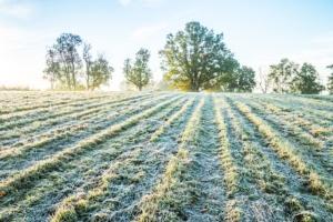 Ergovit-Stim contro le gelate tardive - Fertilgest News