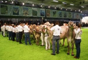 bruna-vacche-montichiari-20170130