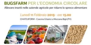 bugsfarm-2019