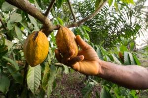 cacao-camerun-by-silvia-truessel-adobe-stock-750x500