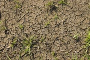 Agricoltura e cambiamenti climatici: sfide e opportunità - Plantgest news sulle varietà di piante