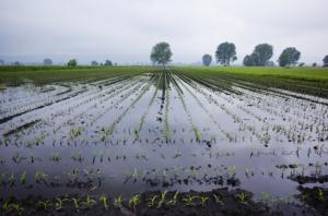 campi-allagati-alluvione-maltempo-by-ruzi-fotolia-750
