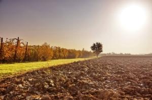 Nuova annata agraria: come cominciare con il piede giusto?