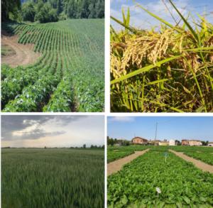 Cerefol: azoto, zolfo e magnesio per piante sempre giovani - Fertilgest News