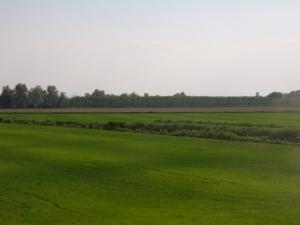 campi-riso-delfrate-paolo