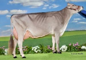 campionessa-vacche-bruna-2015-foto-luca-nolli