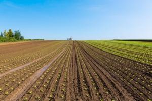 campo-agricolo-agricoltura-by-martin-schlecht-fotolia-750