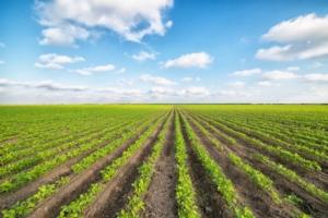 campo-agricolo-agricoltura-colture-by-sondem-fotolia-750