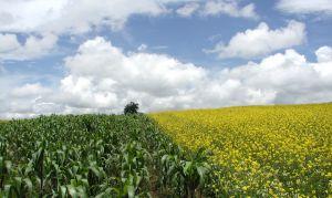 campo-agricolo1