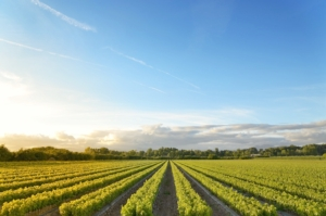 campo-agricoltura-by-jcfmorata-fotolia-750x497