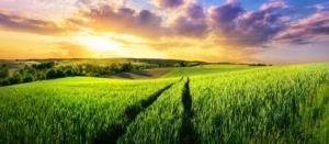 campo-agricoltura-cielo-tramonto-by-smileus-adobe-stock-750x327