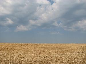 campo-agricoltura-frumento-raccolto-byflickrcc20-tskdesign