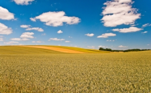 campo-agricoltura-paesaggio-by-olivier-poncelet-adobe-stock-750x466
