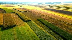 campo-agricoltura-veduta-aerea-by-marcin-jucha-adobe-stock-750x421