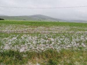 Sud, la grandine colpisce grano, foraggio e ortive