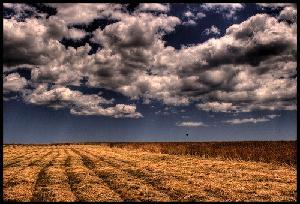 campo-grano-nuvole-byFlickrcc20-twoblueday