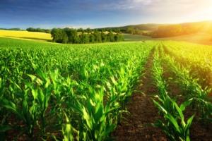 Linea mais 2021: soluzioni per la protezione e nutrizione del mais