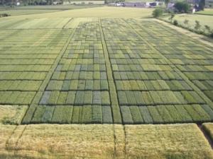 L'importante sinergia tra centro di saggio e sperimentazione nel settore delle sementi - Plantgest news sulle varietà di piante