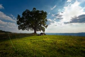 campo-paesaggio-fonte-consorzio-tutela-vini-soave