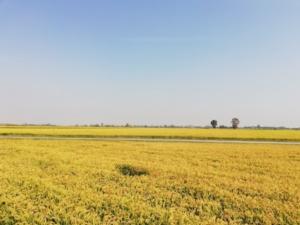 campo-progetto-saturno