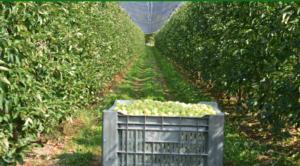 campo-raccolta-mele-preparazione-primavera-redazionale-ottobre-2021-fonte-l-gobbi