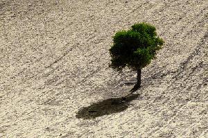 campo-vuoto-con-albero-byHAMED-MASOUMI-flickrcc20