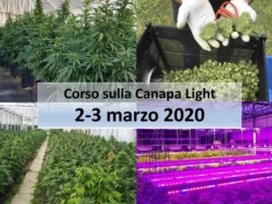 canapalight2020-fonte-fritegotto