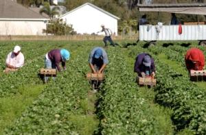 Costo del lavoro agricolo: basta ipocrisie