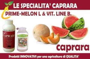 caprara-prime-melon-vit-line-b-2016