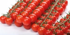 caravaggio-pomodoro-fonte-enza-zaden
