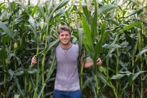 La riscoperta del mais corvino - Plantgest news sulle varietà di piante