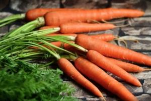 Carota, nel 2017 prezzi su e volumi giù - Plantgest news sulle varietà di piante
