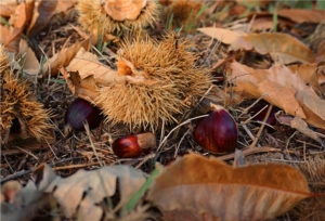 castagne-bosco-castagneto-by-felipe-ramos-wikipedia-jpg