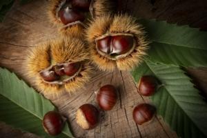 Eurocastanea 2020, il punto sulla castanicoltura europea - Plantgest news sulle varietà di piante