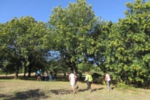 Viaggio nella castanicoltura portoghese - Plantgest news sulle varietà di piante