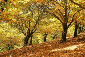 Gli alleati che vengono dal legno - Chemia :: brand Nutriland - Fertilgest News