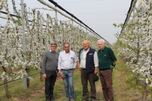 Simposio internazionale del ciliegio, viaggio tra le eccellenze venete - Plantgest news sulle varietà di piante