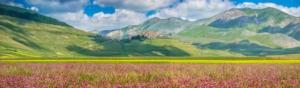castelluccio-norcia-fioritura-lenticchie-jfl-photography-fotolia-750
