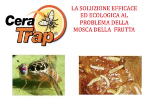 Per la lotta alla mosca della frutta ci pensa Cera Trap<sup>®</sup>