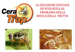 Cera Trap<sup>®</sup>, la lotta naturale alla mosca della frutta