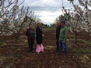 cerasicoltura-roseto-capo-spulico-21apr2016-citta-delle-ciliegie