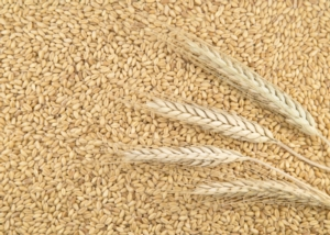 Grano duro all'origine a -2,2%