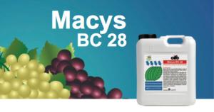 cifo-macys-28