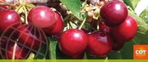 Cot, ricerca al servizio dei frutticoltori - Plantgest news sulle varietà di piante