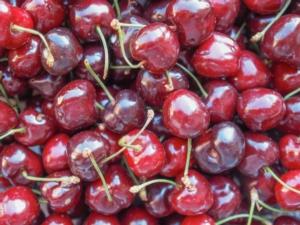 Ics di Vignola, tutte le ultime tendenze della cerasicoltura - Plantgest news sulle varietà di piante