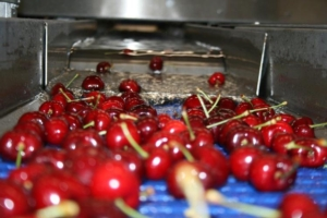 ciliegie-fonte-agrintesa-2021