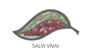 Sistema ciliegio ad alta intensità: un impianto economico di successo - Plantgest news sulle varietà di piante