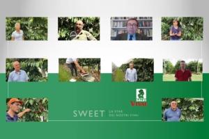 Per Salvi Vivai il ciliegio è senza scale - Plantgest news sulle varietà di piante