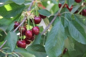 Quante formazioni fruttifere conosci? - Plantgest news sulle varietà di piante