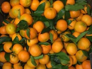 clementine-fonte-confagricoltura-20210120